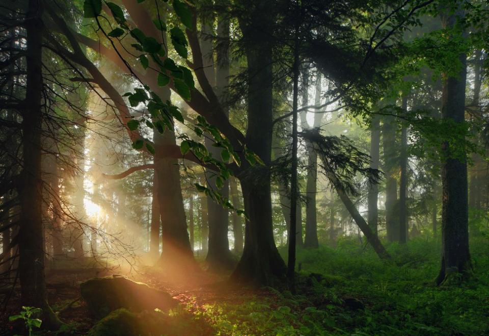 9-Sonne-Wald